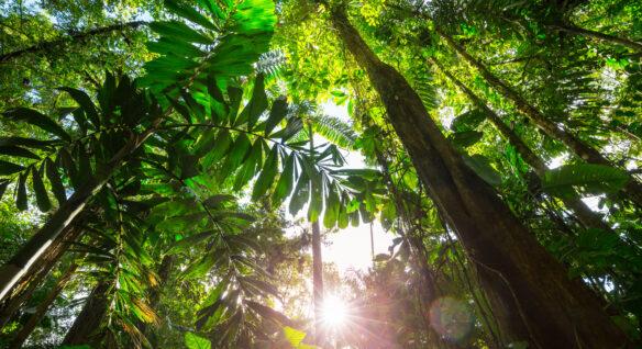 selva latinoamericana